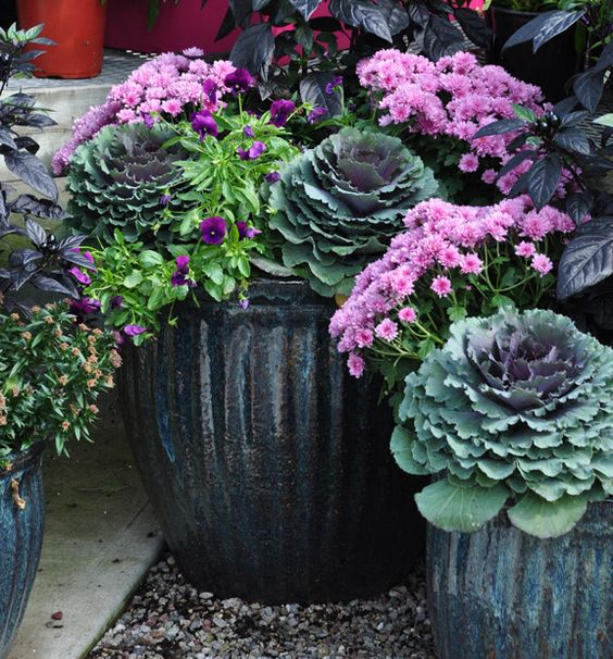 Wondering how to update your container gardens as the weather cools off and the leaves start to fall? This autumn, try adding pumpkins, planting cabbages, accenting a window box with creeping jenny, and more! You'll love these beautiful solutions for fall container gardening.