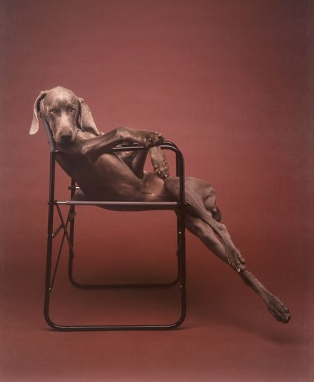 William Wegman, Lolita, 1990.      In 1992, the Whitney Museum of American Art held a 20-year retrospective for William Wegman, which included paintings, drawings, photographs, and video installations.  Roberta Smith, a reporter for the New York Times, shared her thoughts on the retrospective.