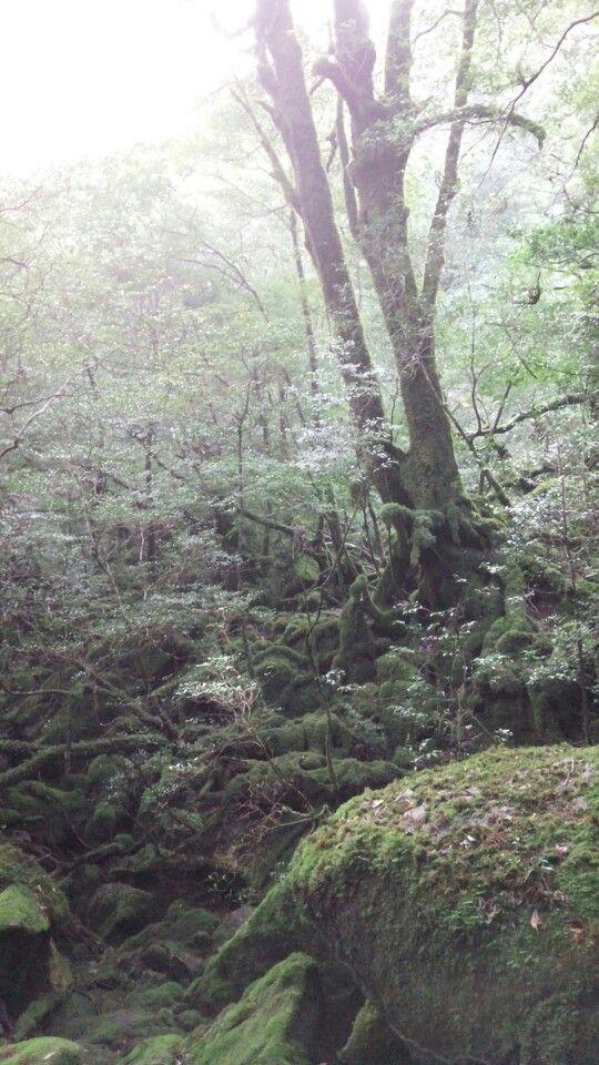 白谷雲水峡、朝の光[yakushima]
