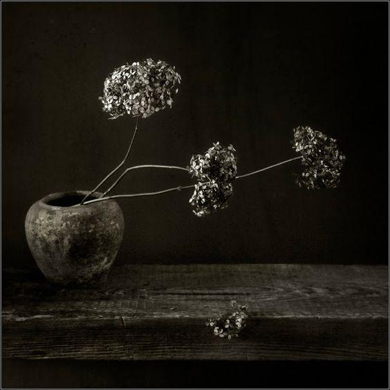 PhotoGraphist: Осенний букетик \  Игорь Жижилкин