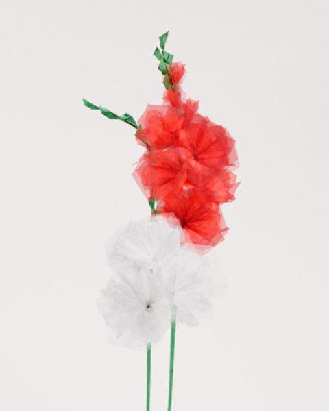 """""""Gladiolen weiß-rot,2015, Origami-Blumen, FineArtPrint"""""""