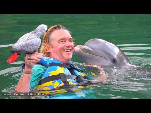 """Lucky"" the PARROT meets ""Venus"" the DOLPHIN! In British Virgin Islands, Caribbean - YouTube"
