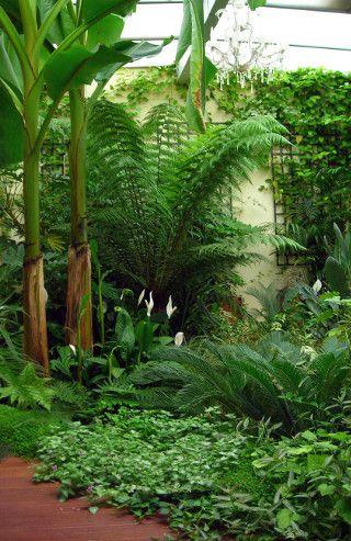 1000 id es sur le th me jardin exotique sur pinterest. Black Bedroom Furniture Sets. Home Design Ideas