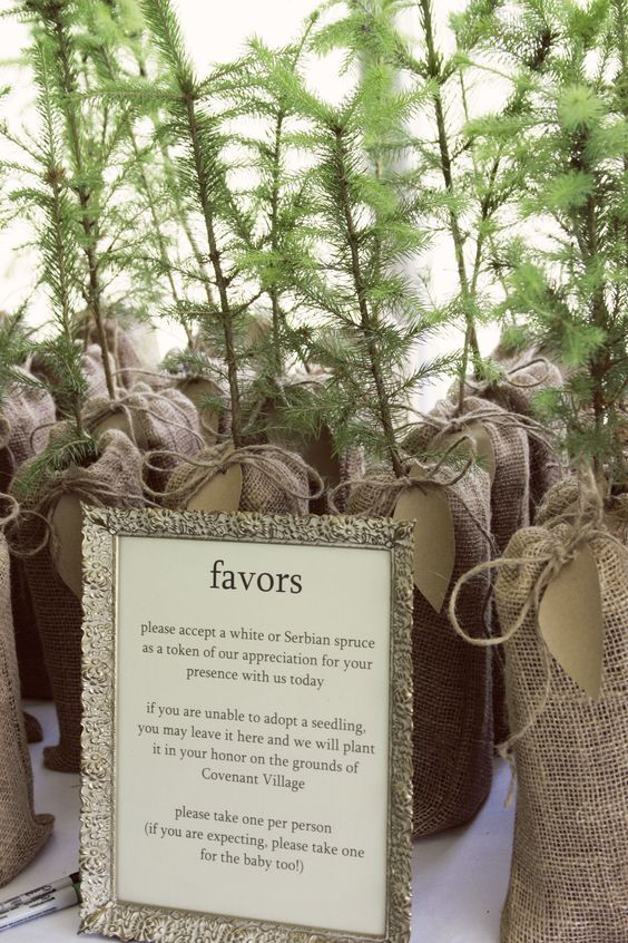 plant-a-tree wedding party favors mmmm order from the forest department...think for free  Love this. Maybe these seedlings as a centerpiece? Seeds for favors?