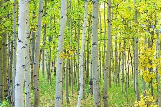 Congrats, planet Earth–we have seven times more trees than we thought!