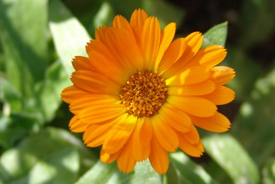 Companion Planting for your Kitchen Garden - Homegrown & Healthy