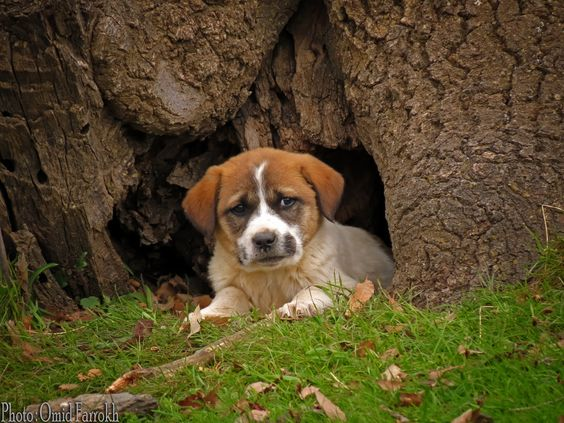 Sad Puppy by Omid Farrokh on 500px