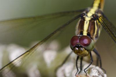 Insecte benefice pentru grădina (1)