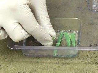Learn to make these pretty grass soaps for spring and summer! You Will Need: -Clear Glycerine Soap Base -White Soap Base (Any Kind) -Rectangle Soap Mold -Green Soap Colorant (We used a mixture of the Sunshine Yellow and Teal Green…