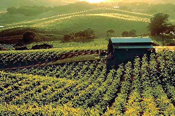 Sonoma County: Favorite Places, California Travels, Wine Country, County California, Northern California, Beautiful Place, County Vineyard, California Vineyard, Places I Ve