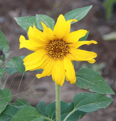 A great post on the essential and important reasons to grow flowers in your garden.