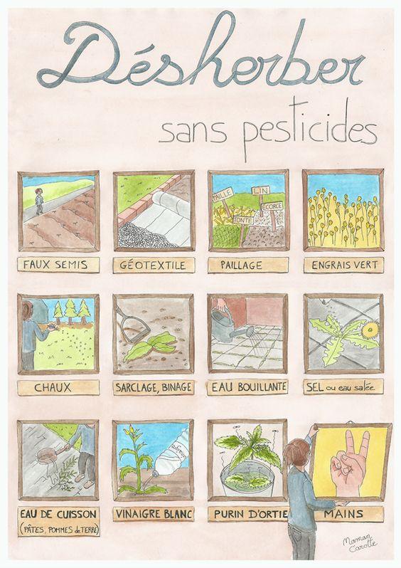 12 méthodes pour désherber sans pesticides ! Les désherbants naturels et écologiques.
