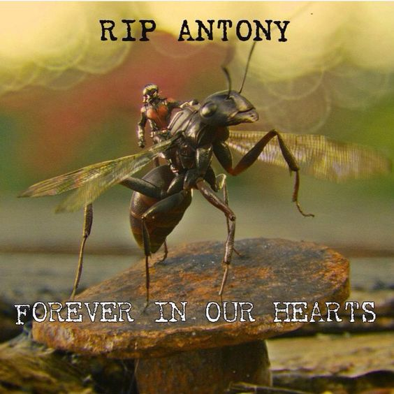 ANTONY! I shouldn't be so emotional over Antony... Ant man was a really good movie