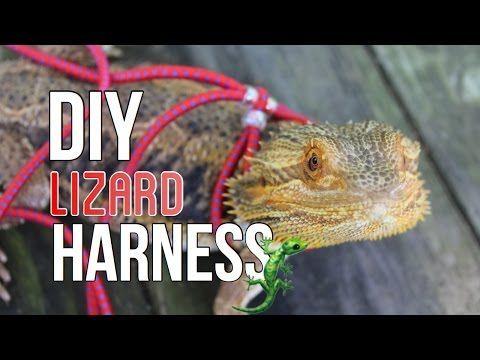 1) DIY LIZARD HARNESS & LEASH! - YouTube #beardeddragondiy | Bearded