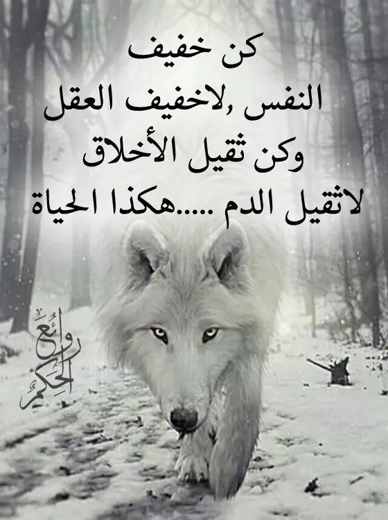 Pin By فلسطينية ولي الفخر On روائع الحكم Quran Quotes Arabic Quotes Lovely Quote