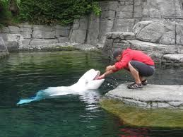 Omg to at sea world as a dentist that would be so cool