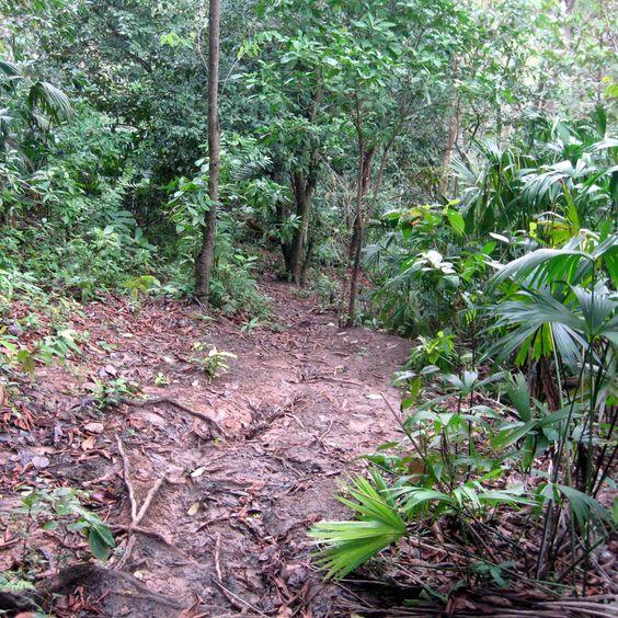 Jungle_path_in_the_Darién_Gap.jpg (1600×1600)