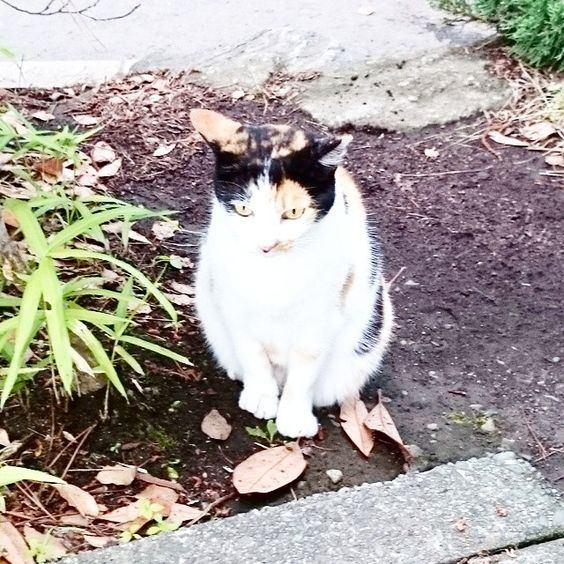 Cat near the place of work