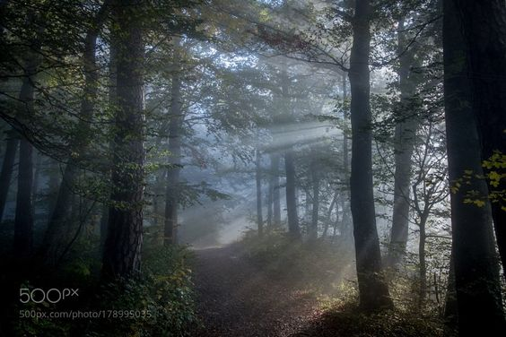RT: Fairy wood I #photography #Pics #Travel https://t.co/30Xe0Sqa3o via Pics500px #followme #photography