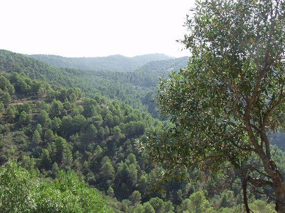 El pinar predomina en esta zona