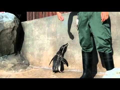 ペンギンたちのかわいいしぐさ