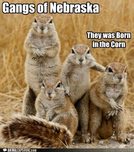 Funny Animal Captions - The Midwest: More Dangerous Than You Think