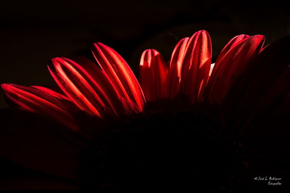 Rojo - En casa, aburrido y con ganas de coger la cámara.