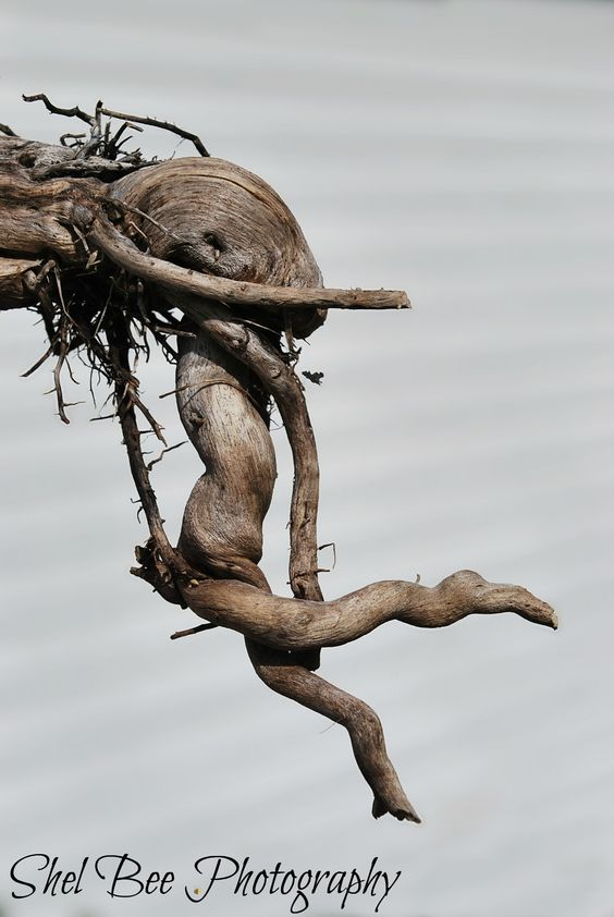 #woodland #fairy - This is a piece of wood I found.