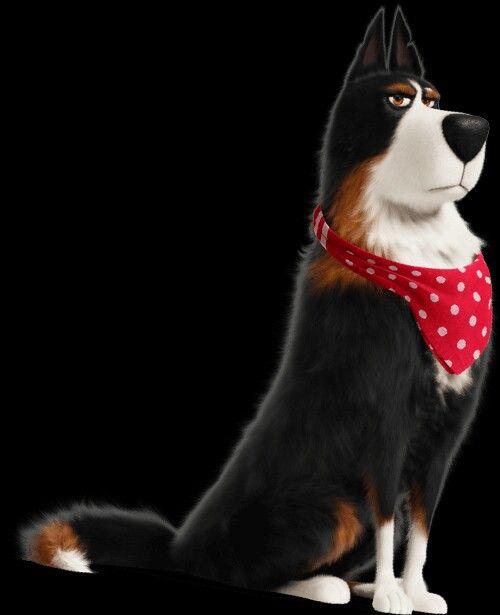 Rooster Shetland Sheepdog Harrison Ford Secret Life Of Pets 2