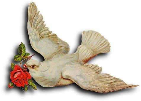 Victorian scrap: Pigeon: