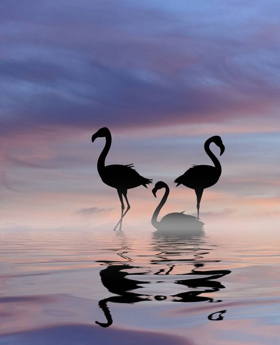 #Flamingos at #sunset a vision from a dream by photographer Dominic Liam @dominicliam. This image was submitted via Instagram by one of our followers. To submit photos for consideration for our feed please follow @featureshoot and tag your photos with the hashtag #myfeatureshoot. // #composite #birdsofinstagram #silhouette #cloudscape #magichour