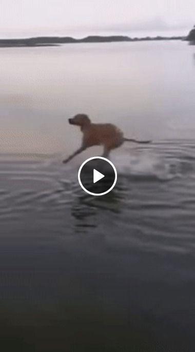 Quando você entra na água e algo estranho toca em suas pernas