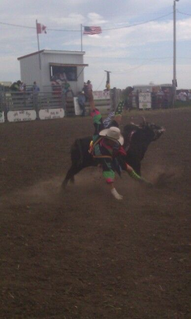 Rodeo clown getting fliped over.