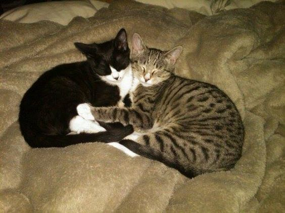 Holly McPhersonCT Lost Pets Yesterday · Edited · Lost Cat ...