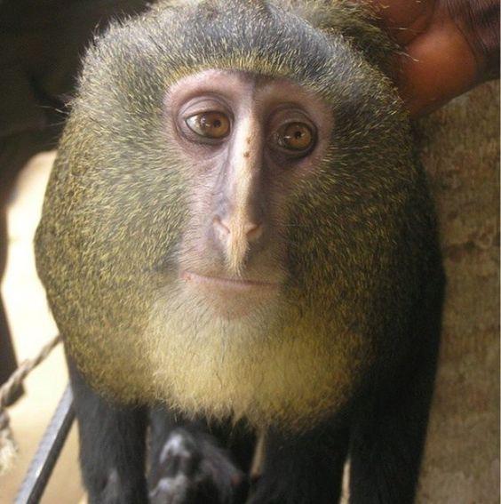 19 amazing animals possessing secret human features - https://kaftipiperia.com