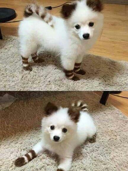 animal mignon petit chien - photo #6