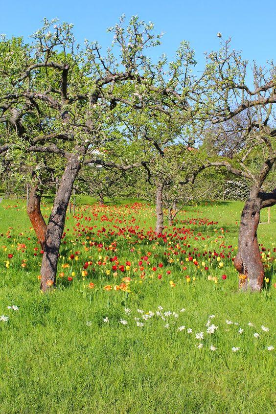 StadtLandLebenslust: Tulipan: Das Festival der 100.000 Tulpen in Berlin...