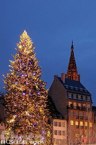 Le grand sapin du marché de Noël, Place Kléber, Strasbourg, Bas-Rhin (67) © Jean Isenmann