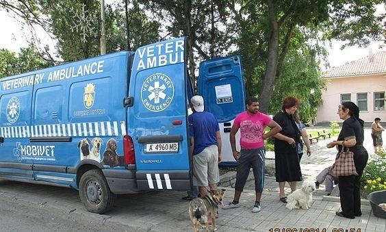 """Безплатна кастрация на домашни кучета ще се извършва в Бургас. Инициативата се осъществява от Общината със съдействието на СНЦ """"Спаси прияте..."""
