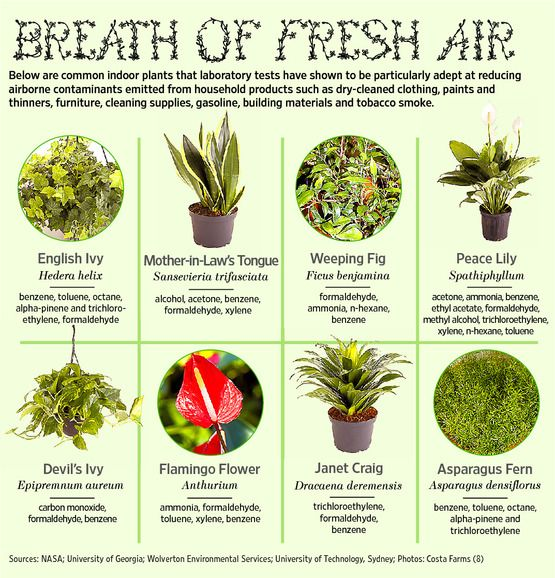 Indoor Plants that reduce airborne contaminants