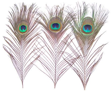Wholesale Lots 50pcs Natural Peacock Feathers 10''12' by wadoy, $12.59