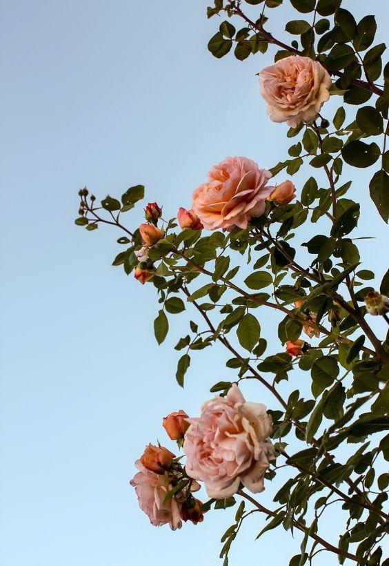Pink Flowers Love Summer In 2019 Flower Wallpaper