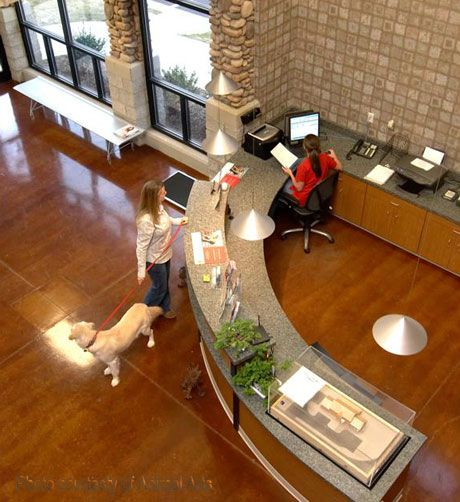design reception areas modern urban veterinary clinic design ideas