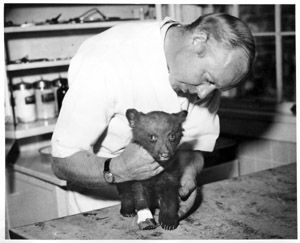 Smokey the bear getting a check up...Yes, he was a real baby bear, once upon a time.  He was found clinging to a scorched tree, severely burned himself.  The poor little fella did the only thing his mother had shown him about escaping predators. The fire was almost too much for him to handle, but he survived and became one of America's most famous animals ever.