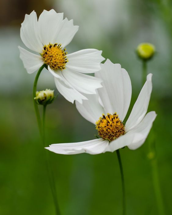 Happy Friday Nobody Sees A Flower Really It Is So Small