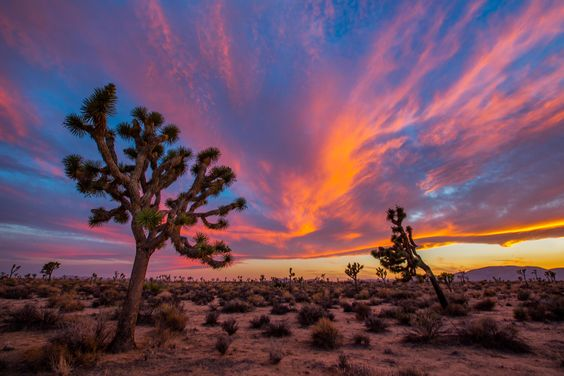 Joshua Tree National Park in California has some of the most beautiful sunsets, like this one captured by Manish Mamtani. It is also known for its unique rock formations (making it perfect for rock climbing) and its Joshua tree forests, which are rumored to be the inspiration for Dr. Seuss's The Lorax. Photo from www.sharetheexperience.org .