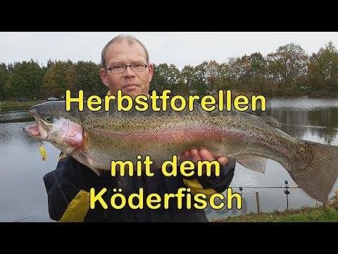 YouTube | Forelle, Lachsforelle, Angeln