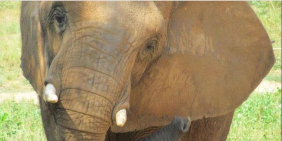 petition: NATURAL BRIDGE ZOO, IT'S TIME TO SEND LONELY, ABUSED ASHA TO SANCTUARY!