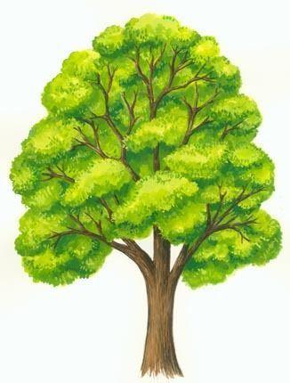 Contoh Gambar 2 Dimensi : contoh, gambar, dimensi, Contoh, Karya, Dimensi, Hasil, Modifikasi, Lukisan, Pohon,, Ilustrasi, Menggambar, Pohon