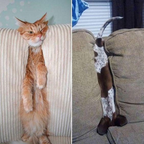 Ces Animaux qui croit être Cachés ...... Un Chien et un Chat